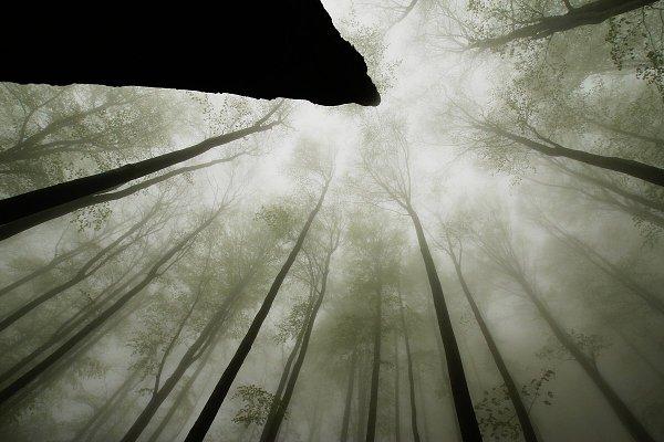 Stromy jsou moje chrámy